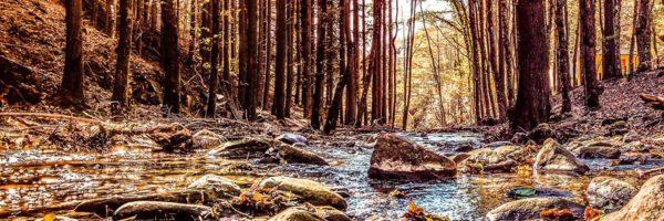 Scorcio delle Foreste Casentinesi